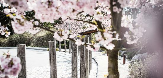 Spring has arrived at Yasuragi!